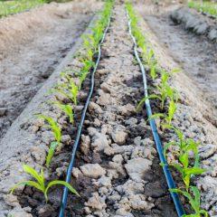 tubería-agrícola-poletileno