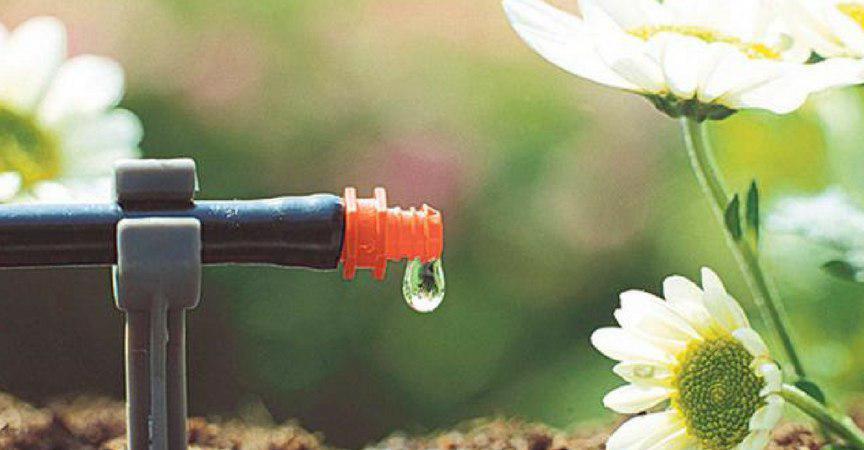 cuidados del jardin en verano