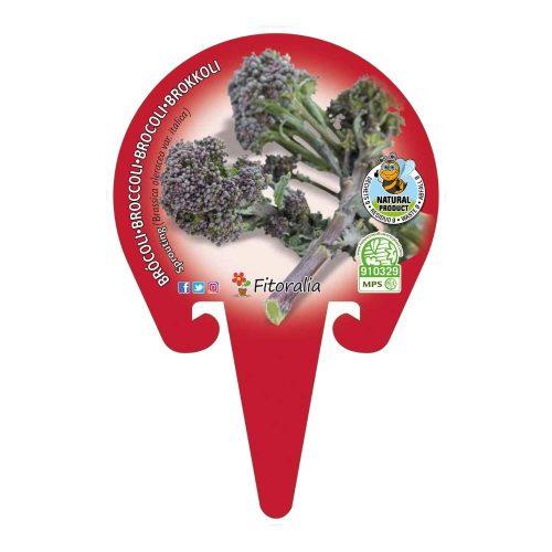 plantel-brocoli-sprouting-eco-cultivo-2