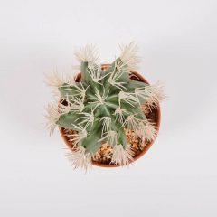 74010042-planta-artificial-stetsonia-coryne-43-cm-5