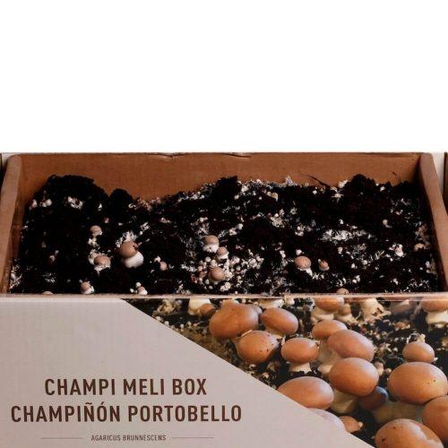 kit-autocultivo-champiñon-paris-agaricus-brunnescens-gardeneas-5