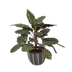planta-artificial-galatea-cebra-49-cm-74010016