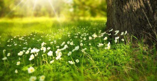 web-blog-imagen-comienza-primavera