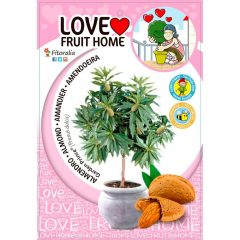 almendro-enano-garden-prince-5l-prunus-dulcis-1