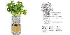 kit-cultivo-hidroponico-albahaca-y-perejil