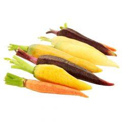 planton-de-zanahoria-colores-6-uds-gama-tradiconal