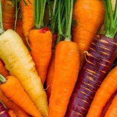 planton-de-zanahoria-colores-6-uds-gama-tradiconal-4