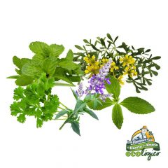pack-aromaticas-saludables-