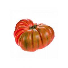 planton-de-tomate-raf-6-uds-gama-tradicional